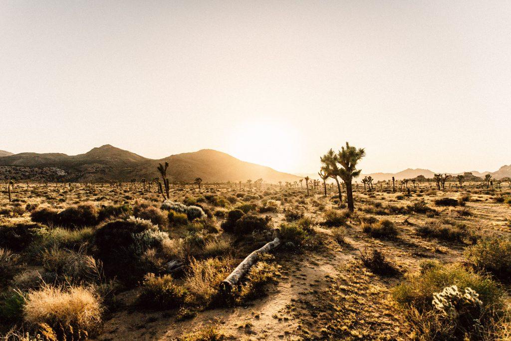 caracteristicas-ecosistema-desierto