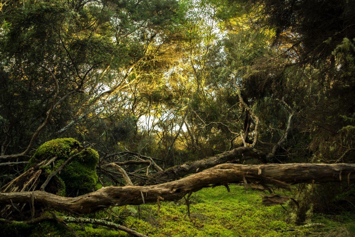 tipos-ecosistemas