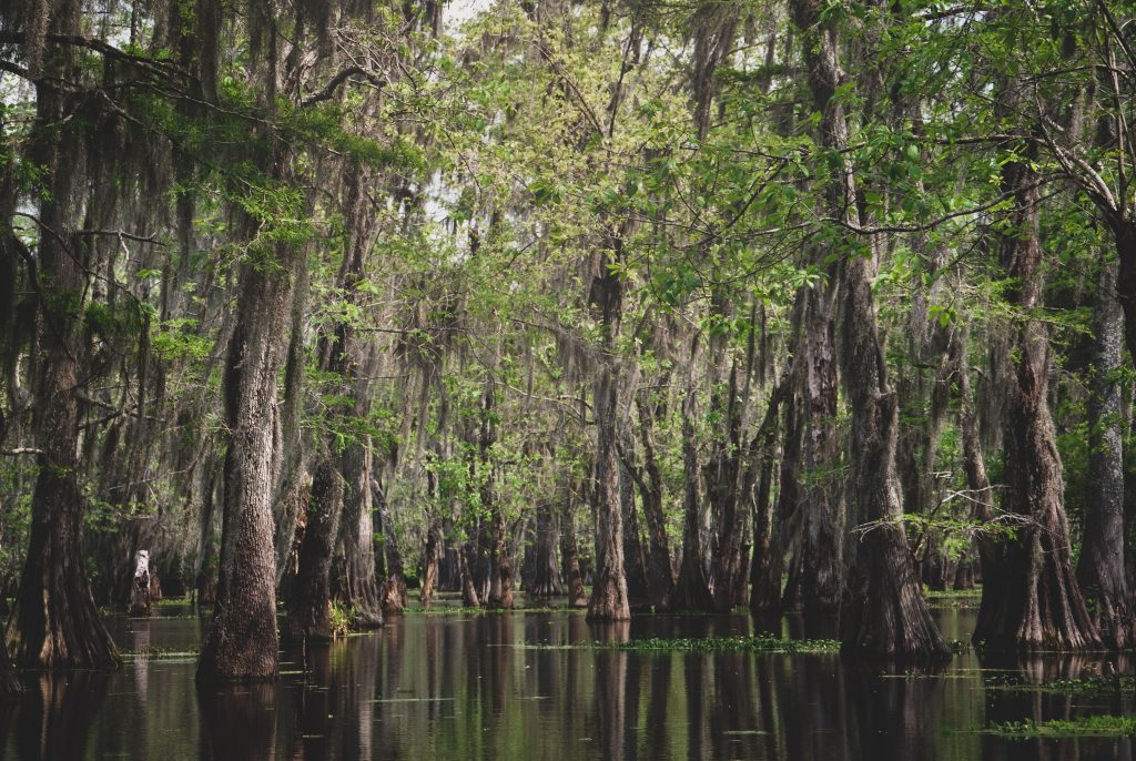 ecosistema-pantano