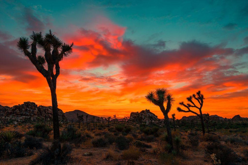 flora-ecosistema-desertico