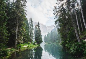 Ecosistema Bosque