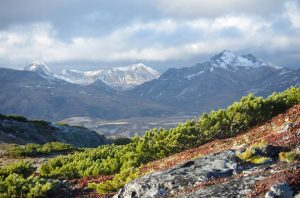 Ecosistema Tundra