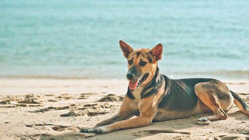 ecosistema ideal para un perro