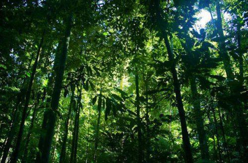 ecosistema de la selva