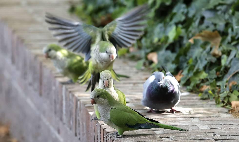 ecosistemas para las aves caseras