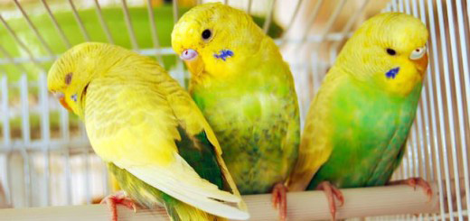habitat de las aves domésticas