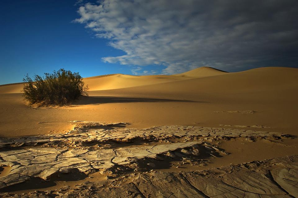 Imagen de un Ecosistema Desertico