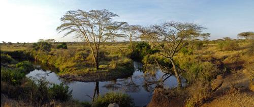 característica de un ecosistema tropical