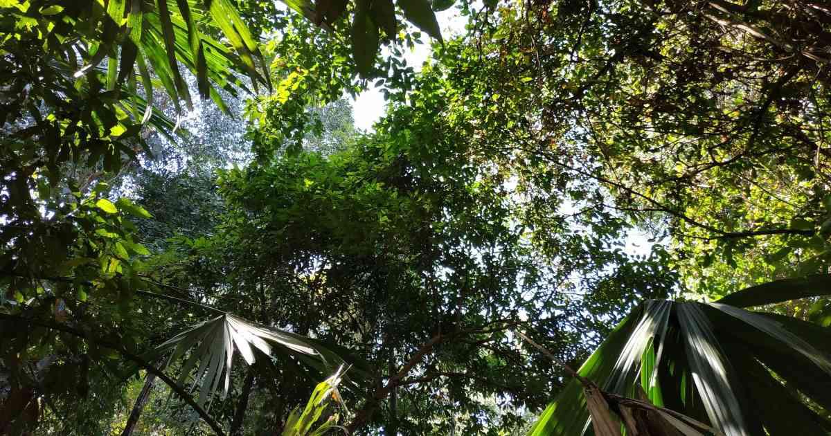 ecosistema tropical