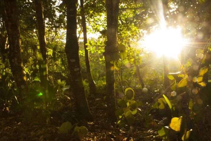 que es ecosistema tropical