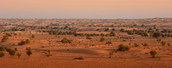 desierto ecosistema