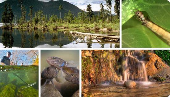 estructura de un ecosistema