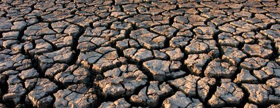 qué afectaciones causa la sequía en un ecosistema